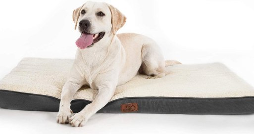 61ITeIi%2BUCL. AC SL1500 Best Dog Bed For Husky 2021 And Buying Guide