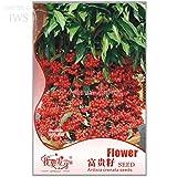 2018 Hot Sale!! Ardisia Crenata Christmas Coral Berry Ornamental Tree, Original Pack,12 Seeds, Tropical Or Indoor No Drought IWSA162