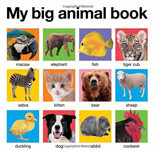 Big Board Book