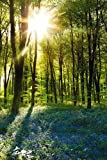 """Forest Sunrise Poster (24""""x36"""")"""