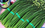 """1g (Approx. 300) Garlic Chives Seeds Bot.: """"Allium Tuberosum"""" Chinese Chives, Cinese Leek, Very Valuable Herb 'Fresh Seeds - Best Before 12.2017!'"""