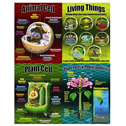 McDonald Publishing Life Science Poster Set (MC-P077)