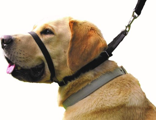 61Qf6mb iIL. AC SL1315 Best Dog Collar For Pulling That Keep Your Walks Struggle-Free