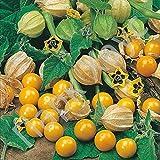 Organic Vegetable Tomatillo seeds Physalis Strawberry Peruvian. 100 SEEDS.