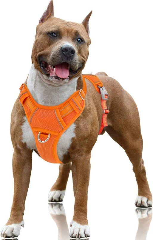 Best Harness For Husky – A Throughout Buying Guide With Recommendations