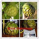 20 pcs Custard apple fruit, Buddha's head fruit, Rare Giant Cherimoya seeds,Sugar Apple, SweetSop, Annona Tree Seeds