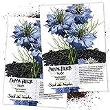 Seed Needs, Black Cumin (Nigella Sativa) Twin Pack of 800 Seeds Each Non-GMO