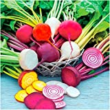 Package of 600 Seeds, Rainbow Mixed Beets (Beta vulgaris) Non-GMO Seeds