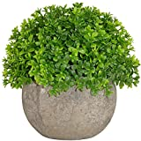 Kumii Small Artificial Topiary Plant in Pot, Baby's tears Grass Decoration, Fake Potted Plant for Office and Home Décor (Clover Green)