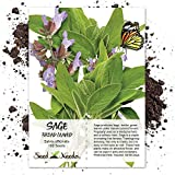 Package of 100 Seeds, Broad Leaved Sage Herb (Salvia officinalis) Non-GMO Seeds by Seed Needs