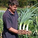 Seeds Leek Autumn Giant Onion Vegetable Organic Heirloom Ukraine