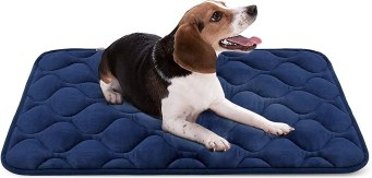 61Z5OL0PLSL. AC SL1500 Best Chew Proof Dog Bed For Your Chewing Friend