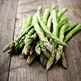 David's Garden Seeds Asparagus Mary Washington SL0021 (Green) 50 Non-GMO, Heirloom Seeds