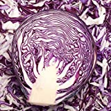 Red Rock Mammoth Cabbage Seeds: 1 Lb - Non-GMO, Chemical Free Sprouting Seeds for Vegetable Garden & Growing Micro Greens