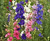 All Colorful Mixes Seed Selection Rainbow Colors Many Choices Wild Flower Blends (Rocket Larkspur Mix: 350 Seeds)