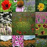 Deer Resistant Wildflower Seed Mix - 1 Lb