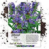 Seed Needs, Blue Hyssop Herb (Hyssopus officinalis) 500 Seeds Non-GMO