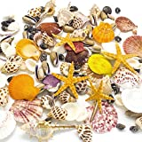 Sea Shells Mixed Beach Seashells, Colorful Natural Seashells Perfect Accents for Candle Making,Home Decorations, Beach Theme Party Wedding Decor, DIY Crafts, Fish Tank and Vase Fillers (80 Seashells)