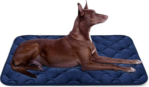 61hTnTwJ6pL. AC SL1500 Best Dog Bed For Husky 2021 And Buying Guide