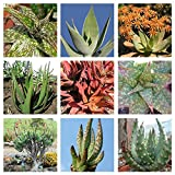 5 seeds Aloe mixed 5,50,100 seeds Easy grow Exotic succulents CombSH C22