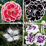 Promotion! 200 Dianthus Seeds , 16 kinds mixed packed, Sweet William flower, easy to grow ,high germination DIY garen