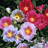 Outsidepride Indian Springs Hollyhock Flower Seed Plant Mix - 1000 Seeds