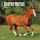 Product review for Quarter Horses 2018 12 x 12 Inch Monthly Square Wall Calendar, Animals Horses (Multilingual Edition)