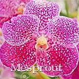 100 Seeds Vanda Coerulea Seeds Diy Plants Pot Seed Germination Rate Of %95 2 #32722953921ST