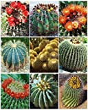 Barrel Cactus Variety Mix Exotic Globular Ball Cacti Rare Flower Seed 20 Seeds