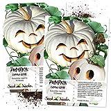Seed Needs, Lumina White Pumpkin (Cucurbita Maxima) Twin Pack 15 Seeds Each Non-GMO