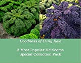 Curly Kale 'Scarlet' And 'Kapral' (Brassica Oleracea L.) Vegetable Plant Heirloom Seeds, Twin Pack
