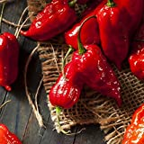 David's Garden Seeds Pepper Hot Bhut Jolokia (Ghost Pepper) SL2001 (Orange) 25 Non-GMO, Heirloom Seeds