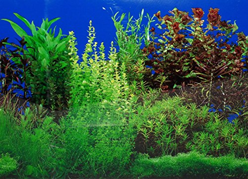 "New 9088 20"" x 48"" Fish Tank Background 2 Sided River Bed & Lake Background Aquarium 3"