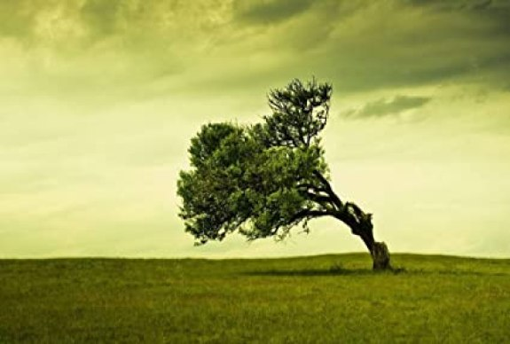 Amazon.com: Leaning Tree Art Print Canvas Poster, Home Wall Decor ...