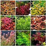 45 Stems/Live Aquarium Plants Package rotala!! ludwigia!!! +More!!!