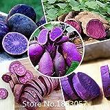High Quality.100 Seeds/Pack.Annual Fruit and Vegetable Seeds Molokai Purple Sweet Potato.DIY Home Garden&Bonsai Plant Seeds Rare