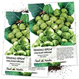 Seed Needs, Brussels Sprout Long Island Improved (Brassica oleracea) Twin Pack of 500 Seeds Each Non-GMO