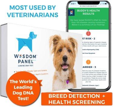 Wisdom Panel 2.5: Test de ADN para razas de perro 1