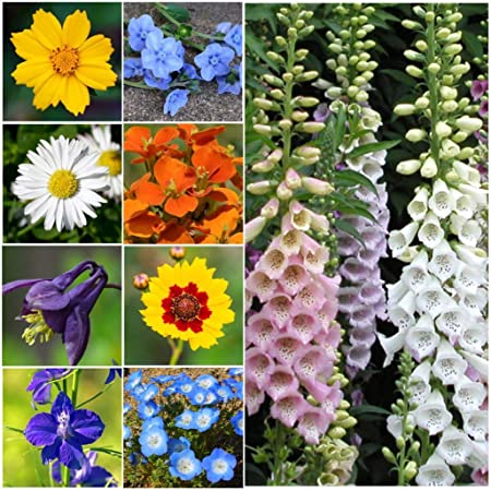 Amazon Com Partial Shade Wildflowers 25 Varieties And Annual And Perennial Flowering Plants 5 Oz Garden Outdoor