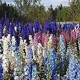 500 Pcs Seeds Flower Seeds Delphinium Seeds Flower Plant Home Garden Flower Plant