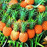 New Arrival! Pineapple Seeds!!! 100PCS / bag Dwarf pineapple seeds, sweet juicy delicious fruit seeds, Rare Bonsai Plant free delivery seeds of hope