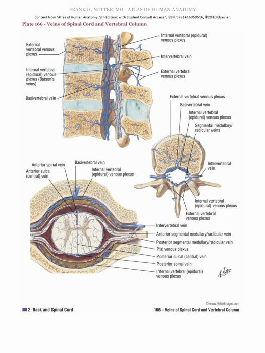 Netter Atlas Of Human Anatomy 5th Edition Ebook Periodic