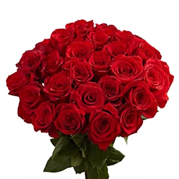 Image result for image of a beautiful rose flower