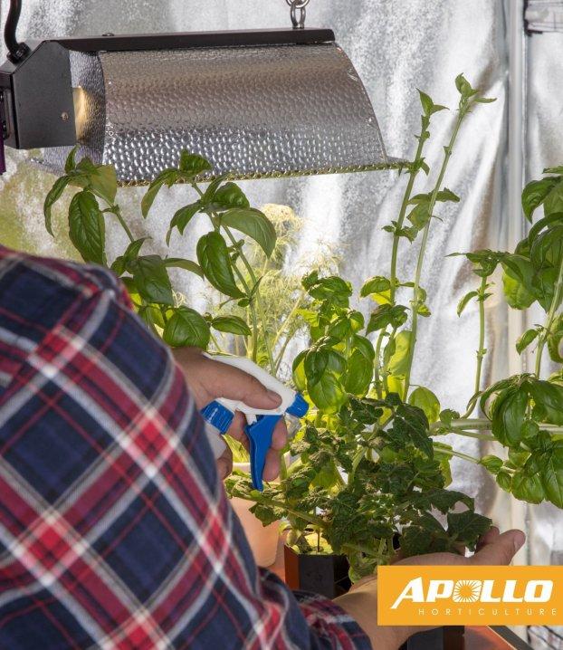 Apollo horticulture grow tent