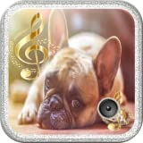 Sounds Of Dogs