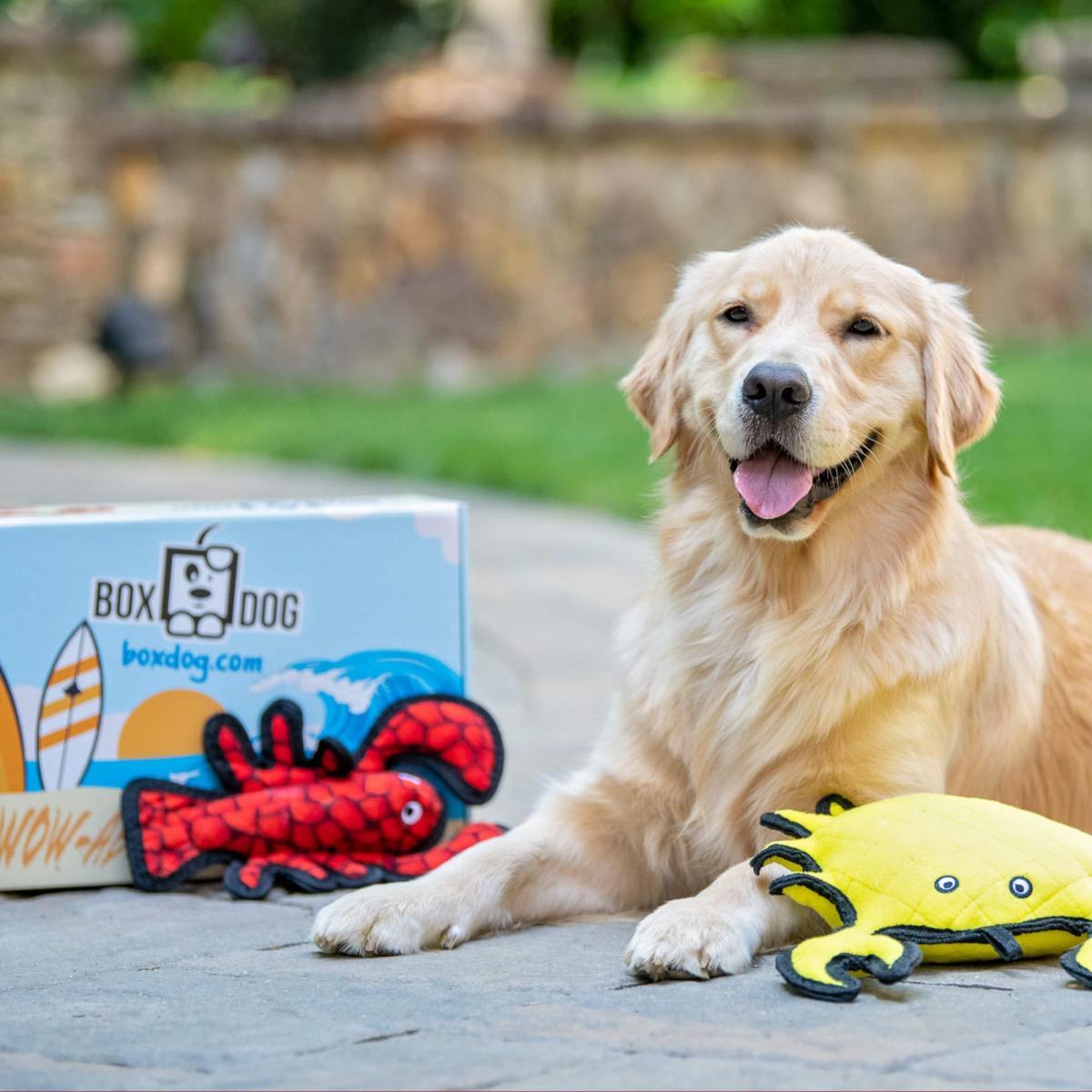 BoxDog 4 Giant Seasonal Dog Boxes per Year