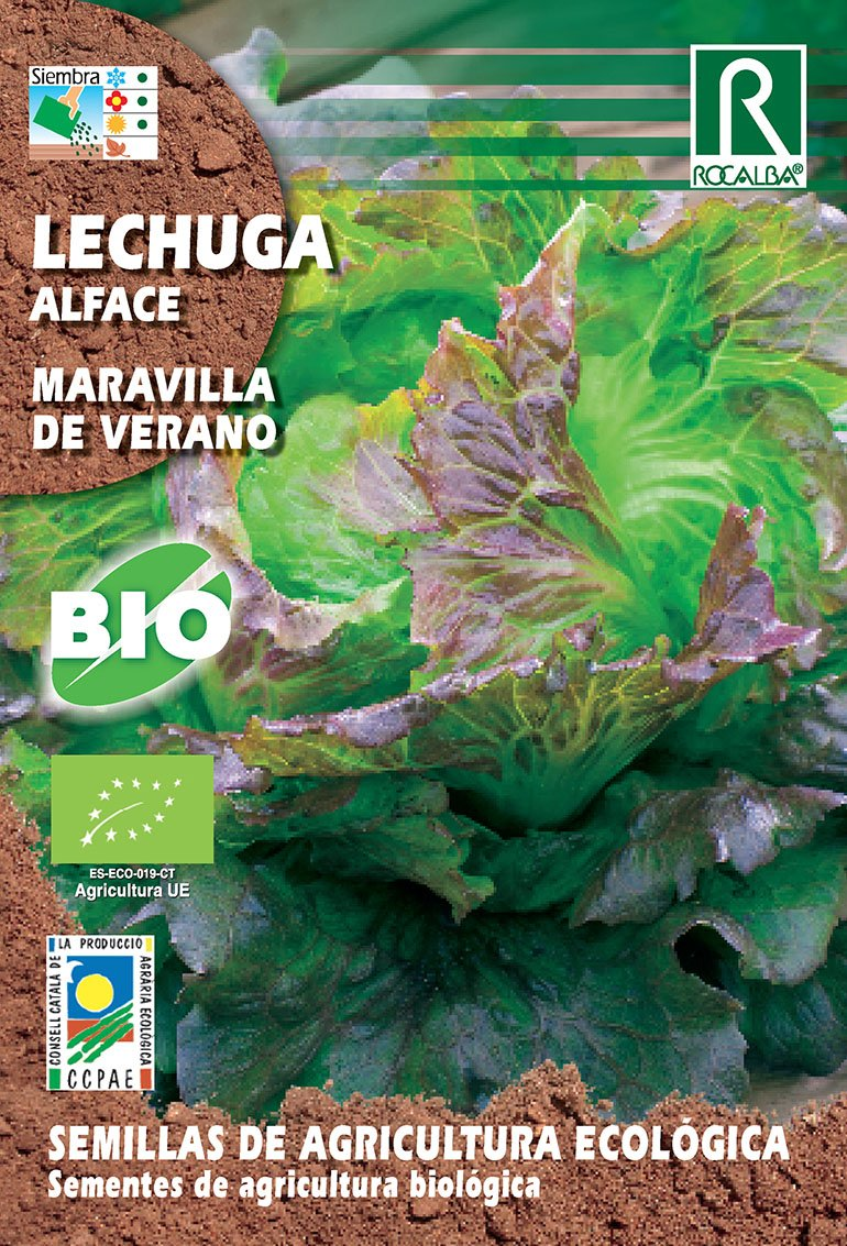 Semillas ECOLÓGICAS Lechuga Maravilla de Verano 2 gr.