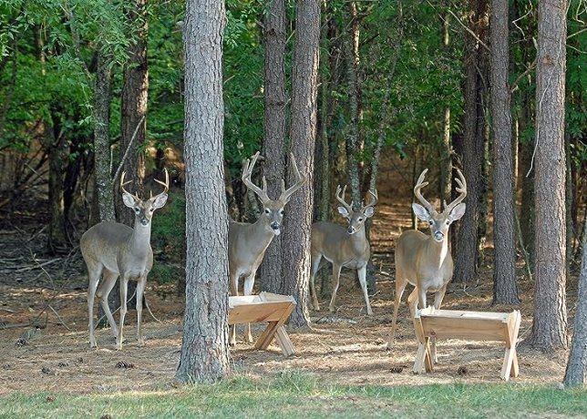 Lure Deer