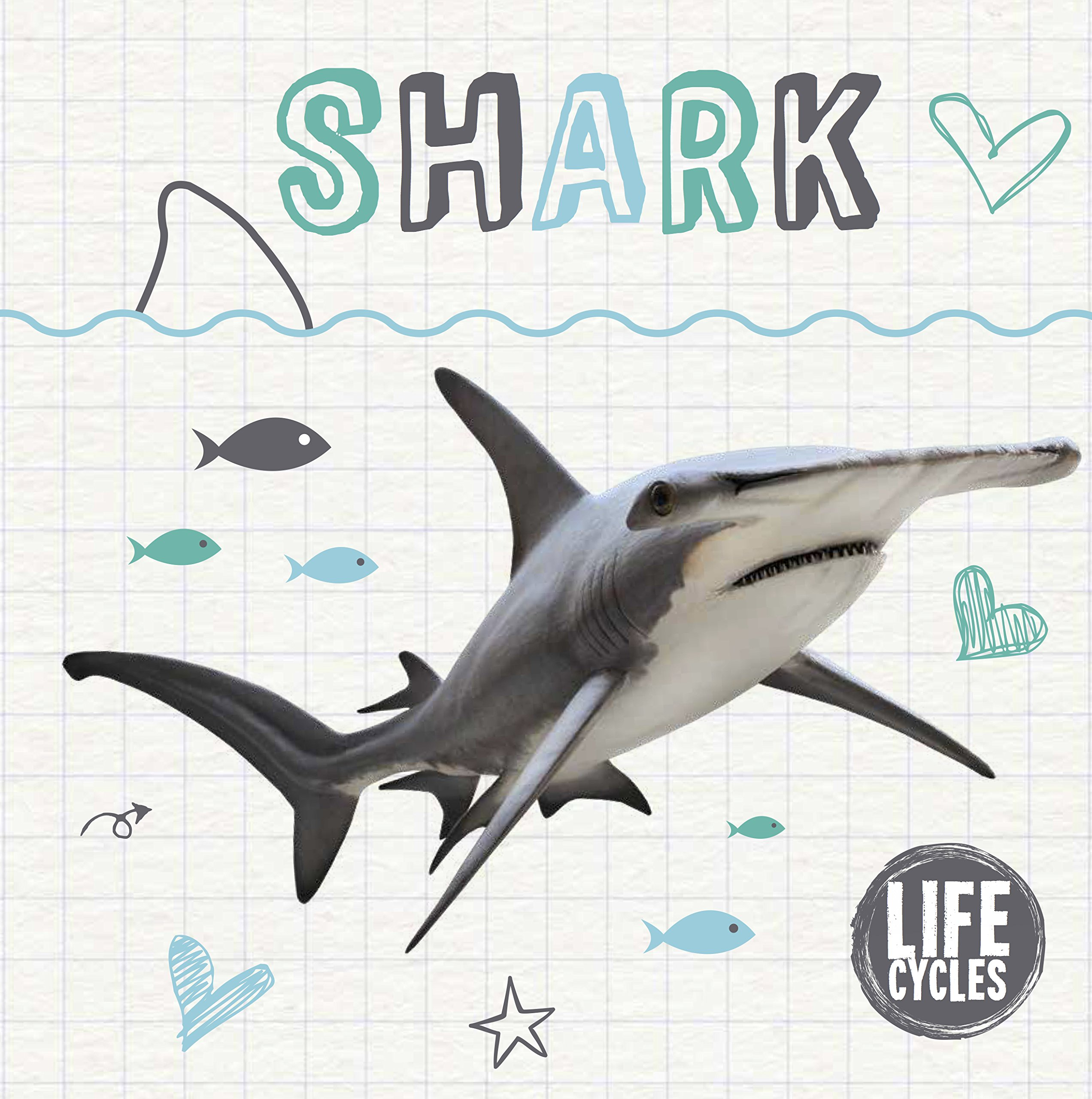 Life Cycle Of A Shark Life Cycles 9781786372857 Amazon Com Books