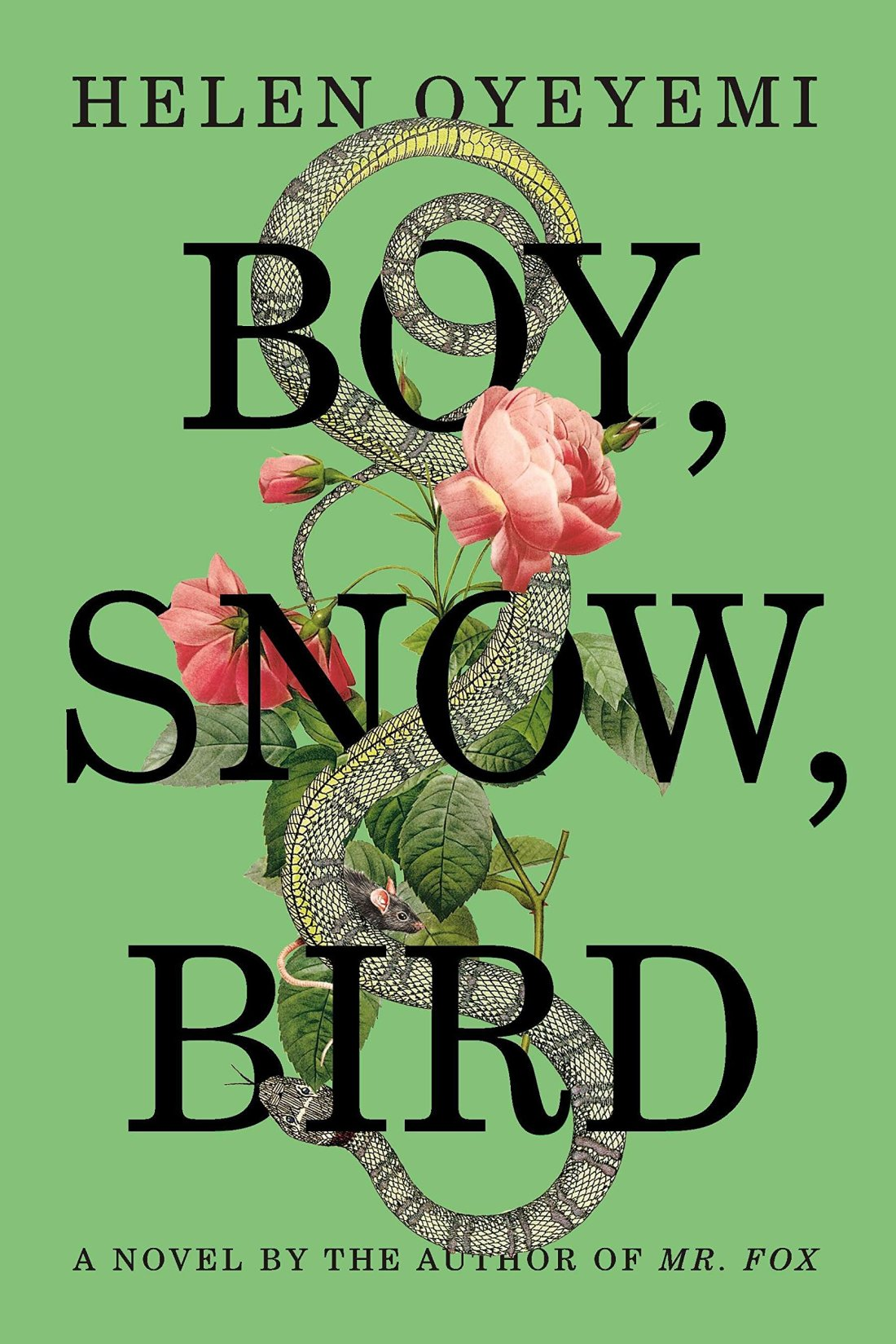 Amazon.com: Boy, Snow, Bird: A Novel (9781594631399): Oyeyemi, Helen: Books